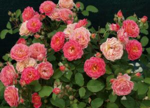Роза Лес Потес де Бедрос