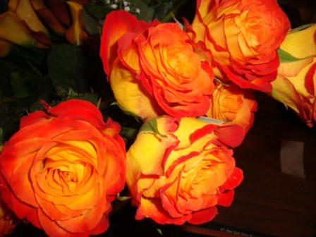 Роза Циркус (2)